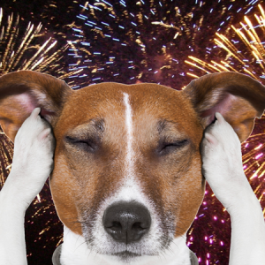 Dog Fireworks Help Friends and Canines