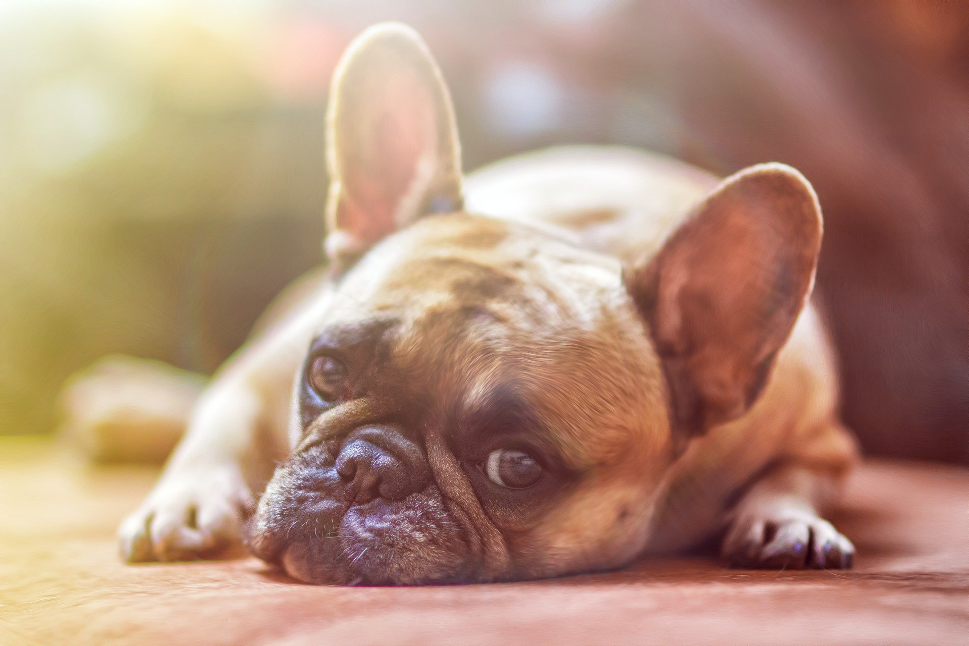 Can I use Colloidal Silver on my dog?