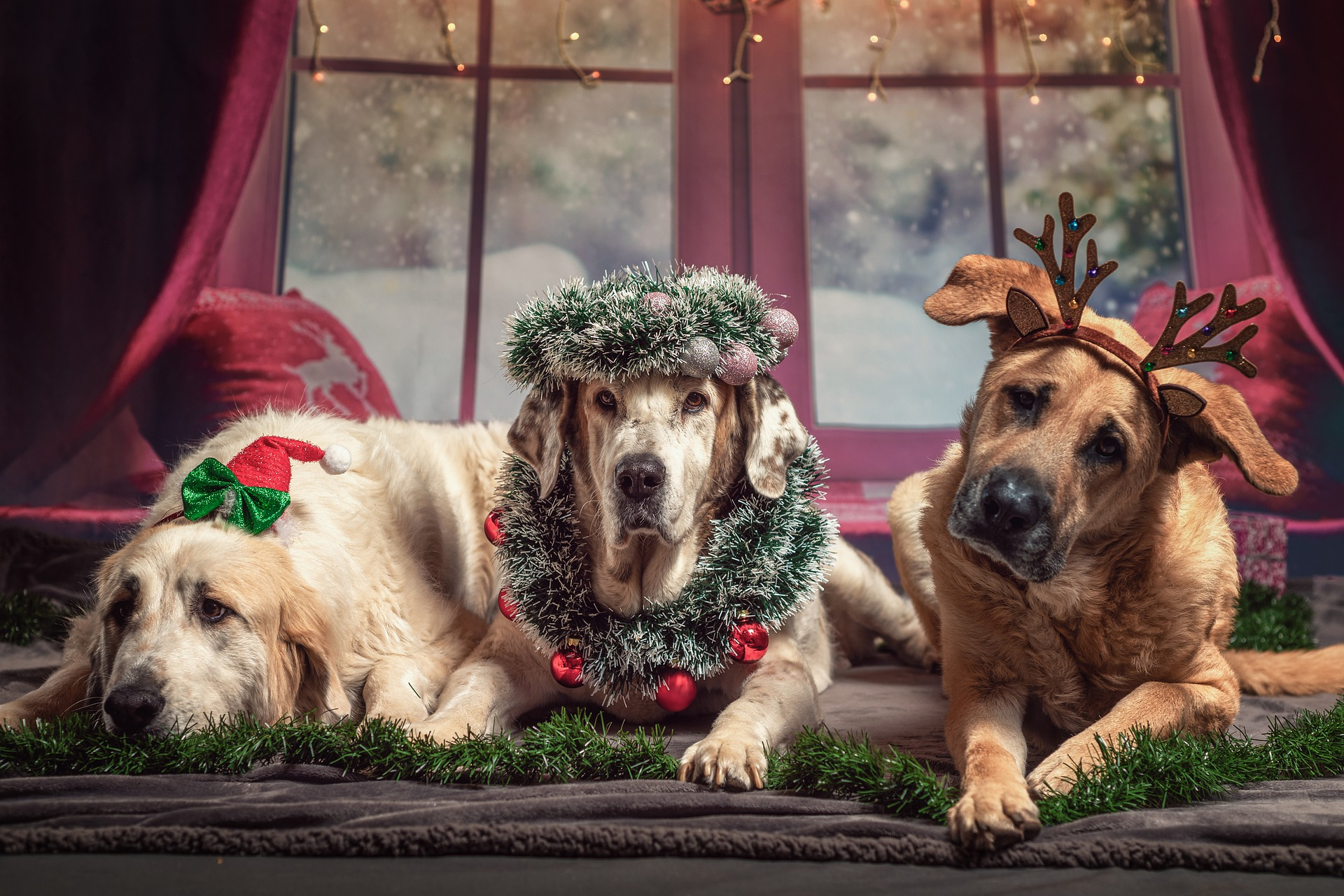 Our Top 10 Woofmas Tips