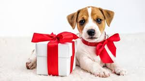 gift voucher | friends and canines natural dog treats