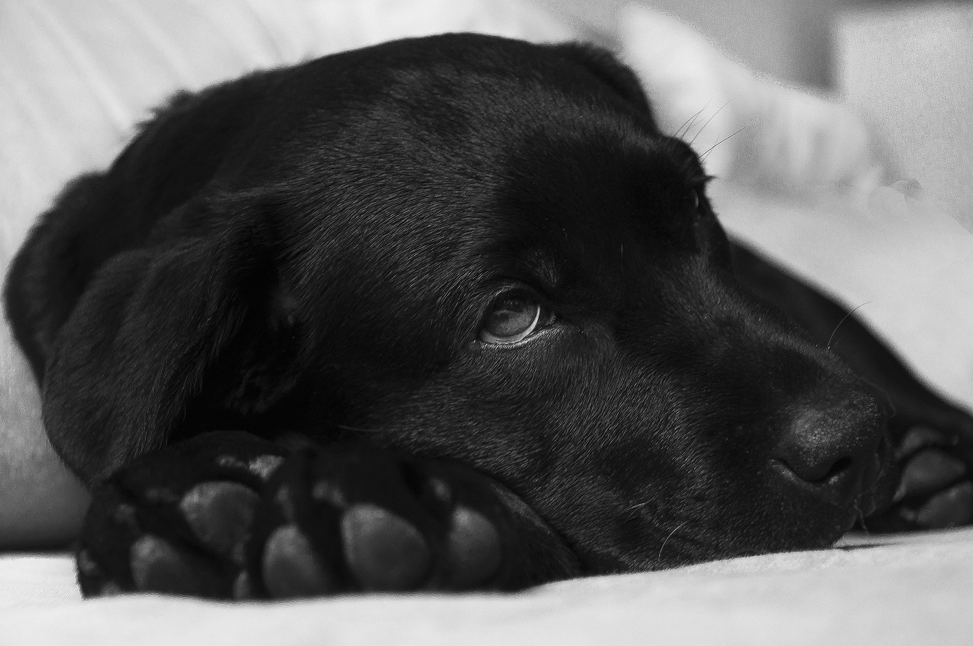 How to help sickness and diarrhoea in dogs