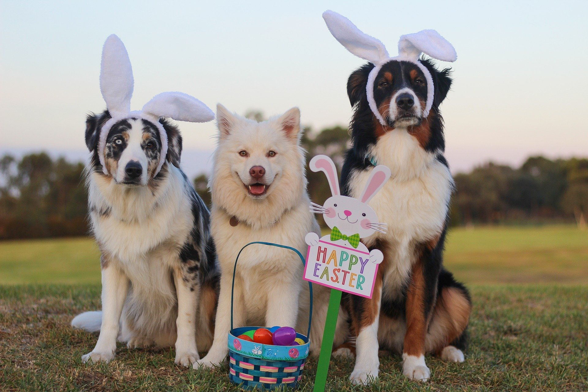 4 alternative Easter treats for dogs