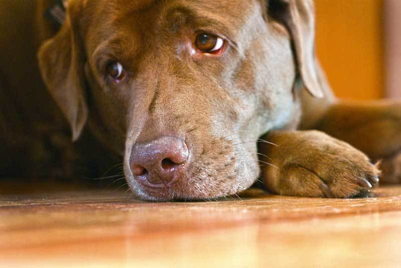 Can Dogs Feel Stress?