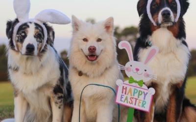 Dog Safe Easter treats
