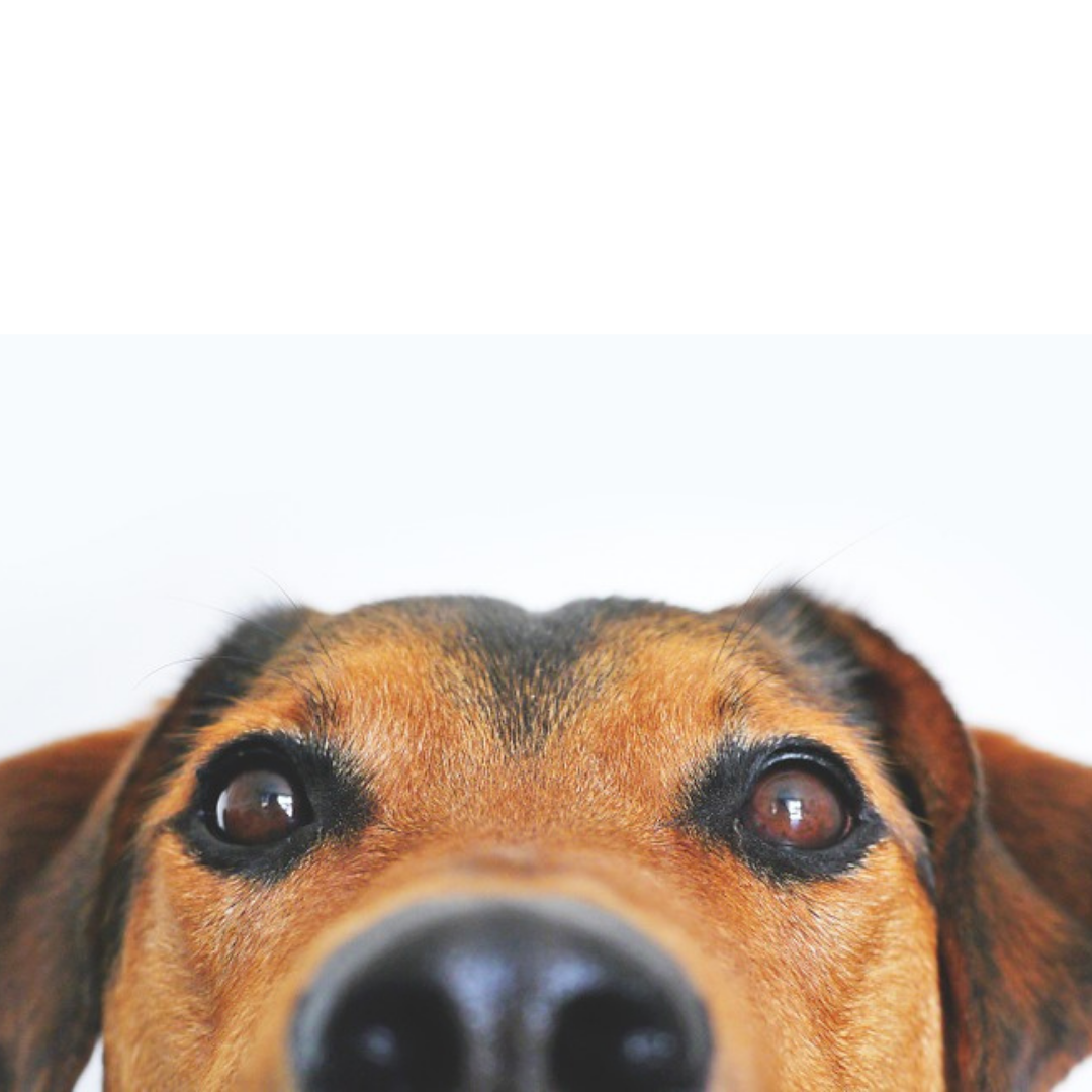natural dog treat subscription