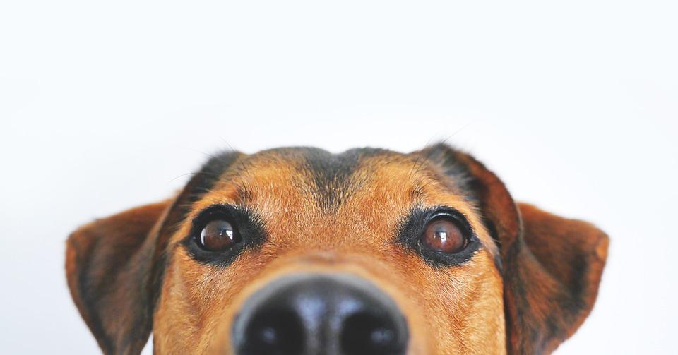 New Natural Dog Treats