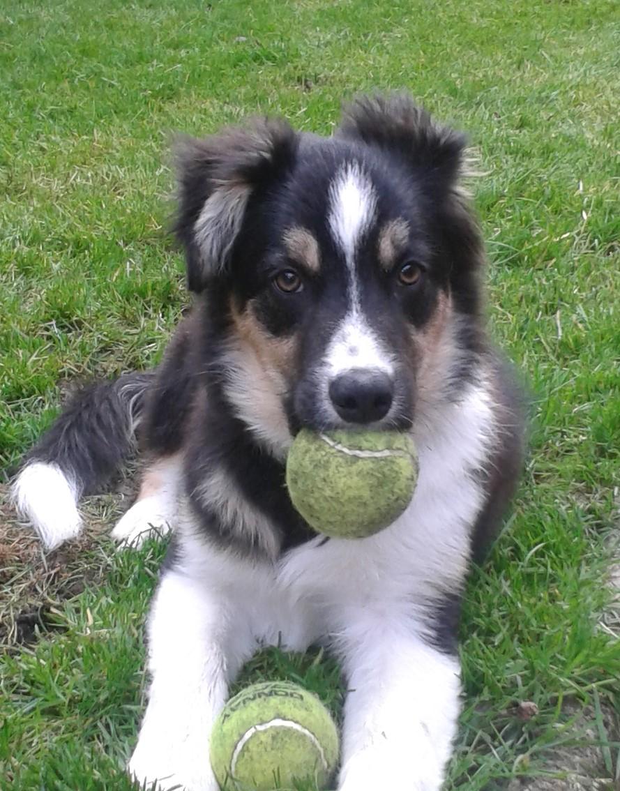 Why I started raw feeding my dogs