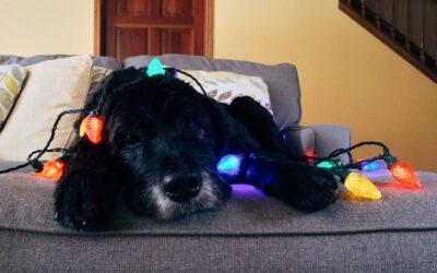 Ho Ho Horrible: What's really in those festive dog treats?