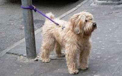 Why you should never leave your dog outside a shop