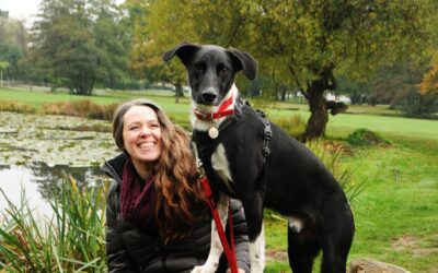 Five Top Tips on Finding A Great Dog Trainer