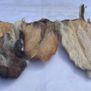 Small Hairy Goat Ear from Friends and Canines